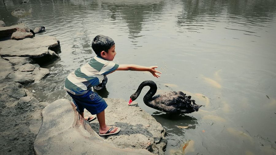 with the black swan. Children Photography Childrenphoto Childhood Childphotography Children Of The World Children_collection EyeEm Animal Lover