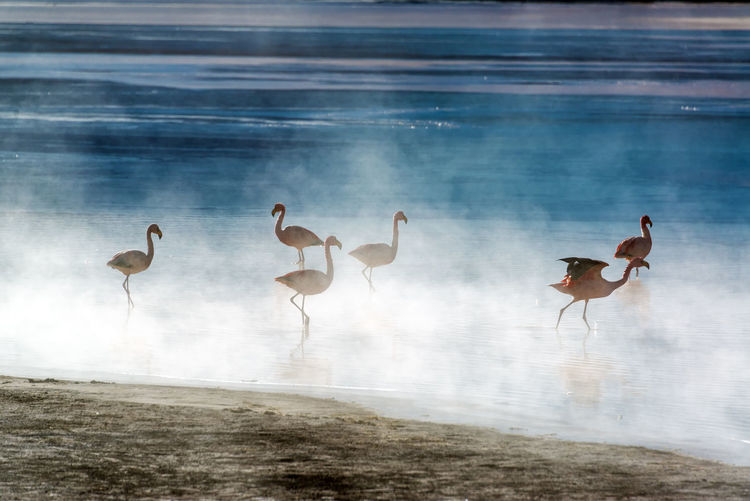 Flamingoes early in the morning in Laguna Colorada in Uyuni, Bolivia Altiplano America Animal Beauty In Nature Bolivia Desert Flamingo Flamingoes Isolated Laguna Laguna Colorada Lake Landscape Mountains Nature Outdoor Outdoors Red Salar De Uyuni Salt Scene Scenic South America Uyuni Wild
