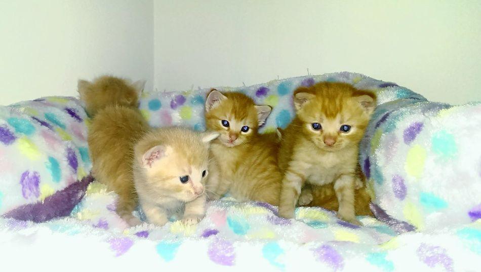 First Eyeem Photo Kittens Kitten Fostermom Foster Cat AdoptDontShop AdoptDontBuy Feline
