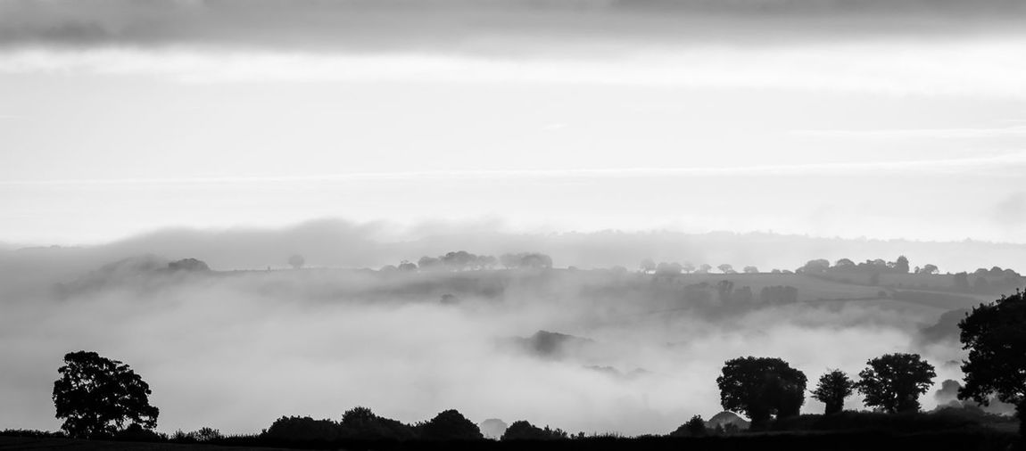 Fog Landscape Nature Beauty In Nature Nature Reserve Scenics Forest Outdoors No People Tree Sky Day Thunderstorm Silhouette Monochrome Black And White Blackandwhite Blackandwhite Photography Peaceful Moment Morning View Dawn Dawn Of A New Day Leominster