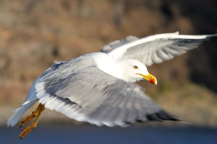 sea gull on photo while he flies by