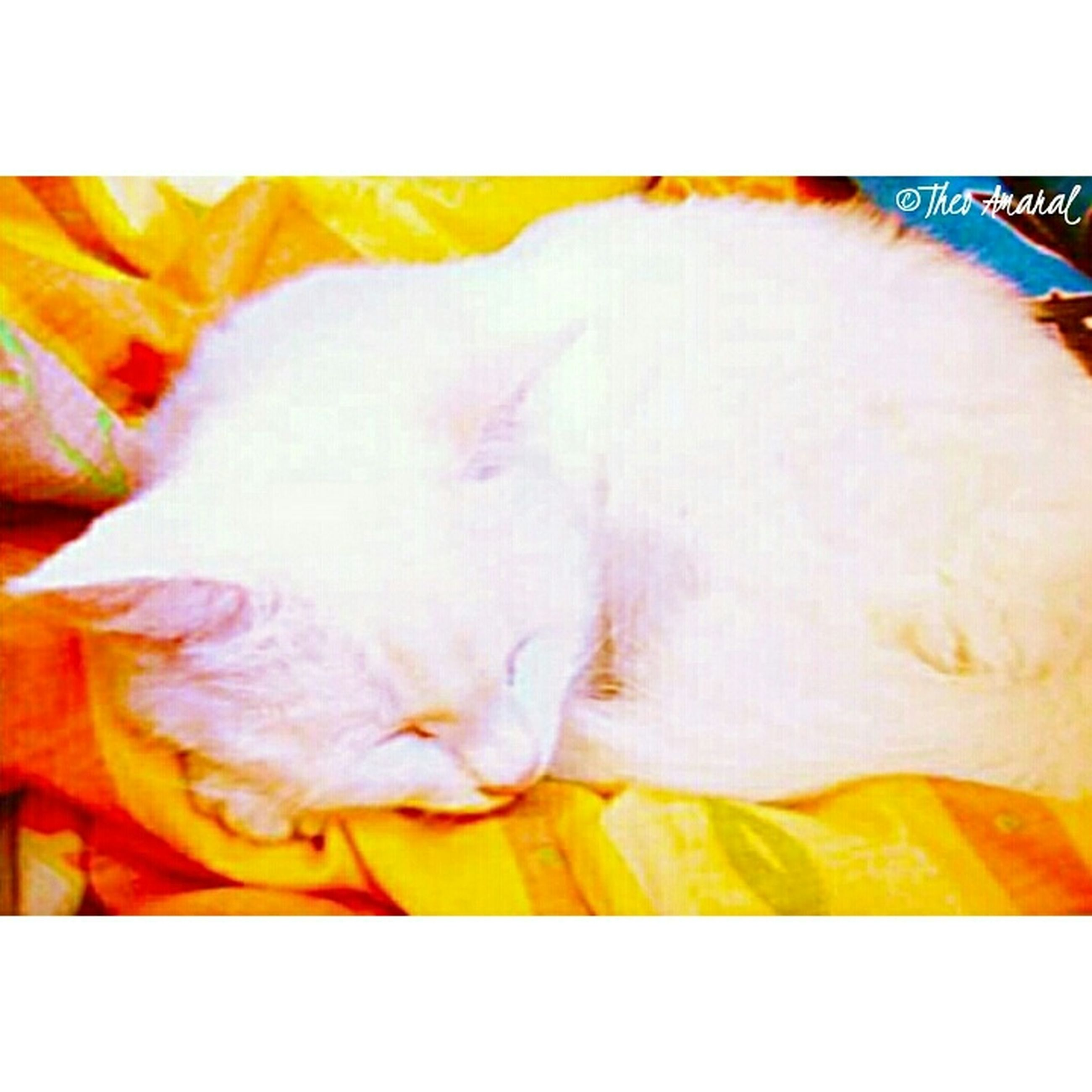 transfer print, auto post production filter, indoors, yellow, pets, domestic animals, sleeping, close-up, relaxation, domestic cat, no people, animal themes, bed, high angle view, one animal, cat, mammal, sheet, resting, selective focus