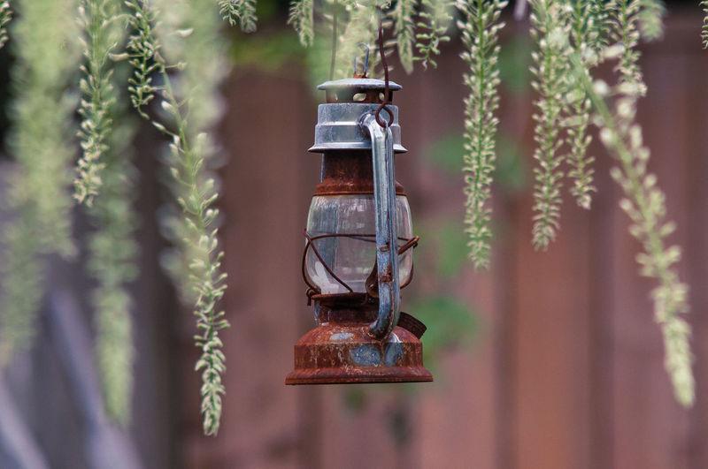 Close-up of illuminated lantern hanging on tree
