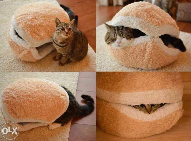 Funny cat 😂😂💙💙 Burger Cat 😂😂 You Follow My Eye Em 💙 I Follow Back Real Picture No Edit Burger Cat Funny