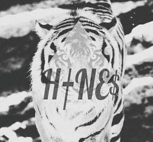 Tigers That's Me Swagg Girls Hines. Just, H†NE$.