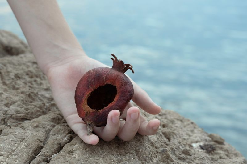 Cropped hand of woman holding dry rotten pomegranate on rock by sea