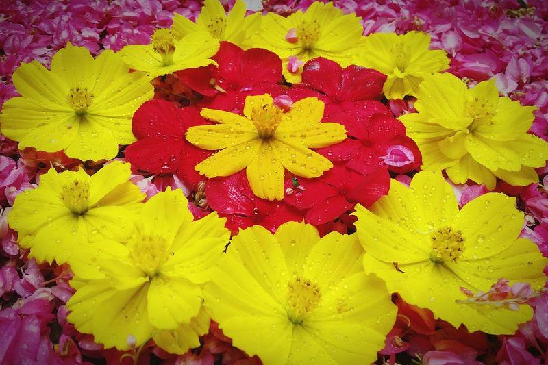 Onamspecial Onamcelebrations Onam 2015 Rangoli Flowerporn Flowerandgardenfestival Kerala The Gods Own Country ;)