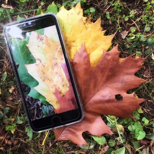 Smart autumn Close-up Leaf High Angle View Portable Information Device Mobile Phone Smart Phone Wireless Technology Change Outdoors Nature