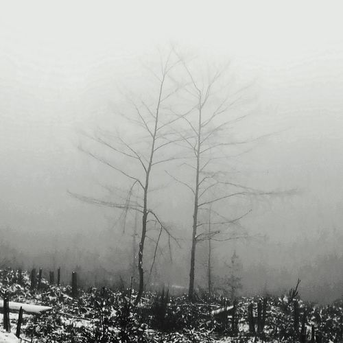 Tree Nature Fog Winter Beauty In Nature No People Tranquility Sky Cold Temperature Day Outdoors Branch Bare Tree Growth Italia Forest Silence Snow ❄ Mountain Peak Scenics Beauty In Nature Mountain Range Winter Mountain Bosco