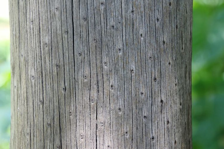 Beautifully Organized Textured  Close-up Day No People Full Frame Wooden Log Patterns In Nature My View Nofilter