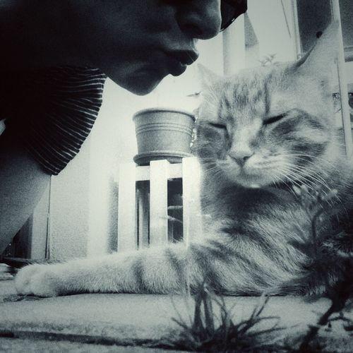 Welcome Home Blackandwhite Eyem Gallery AMPt_community NEM Black&white Shootermag Cat♡ Cat Lovers Mycat Monochrome _ Collection