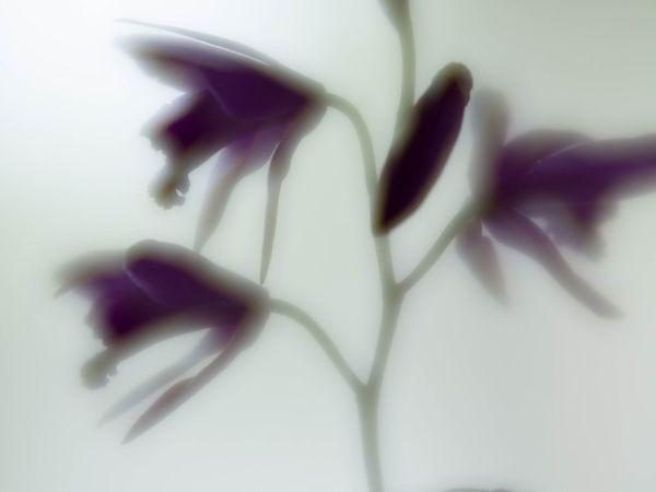 僕はEyeEmが好きです、今回のインスタのリューアルがいかに強力でも、ここも続けます。 Flowers Nature Flowerporn EyeEm Nature Lover 紫蘭