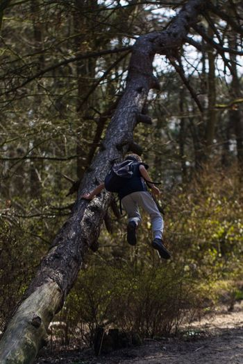 Full length of man jumping on tree trunk in forest