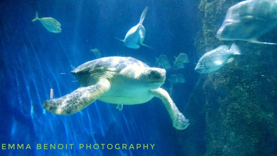 Swimming Deep Blue Sea Ocean Life See Life Family Fun Amphibian School Of Fish Turtle Aquarium