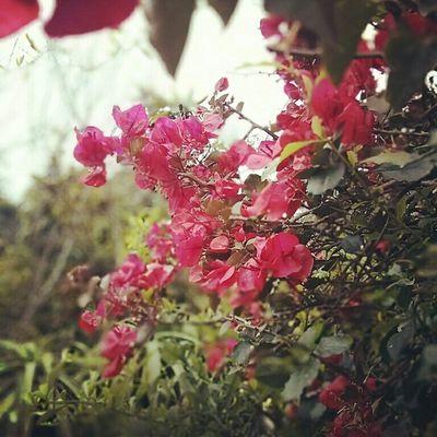 Beautiful Nature Nothing Like Nature Feeling Great ✌ Taking A Break Taking Photos Flowers,Plants & Garden Panama City Chiriqui