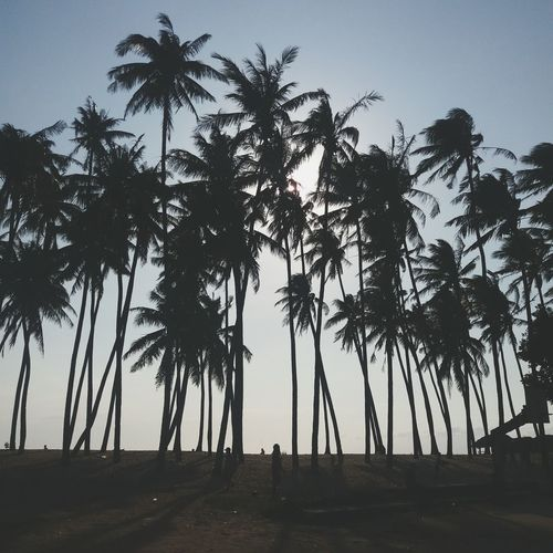 🌴 Tree Palm Tree Silhouette Tropical Climate Tree Area Sky Travel Destinations Vacations People Nature Adventure Beach Beauty In Nature Day Outdoors Adult Adults Only Only Men