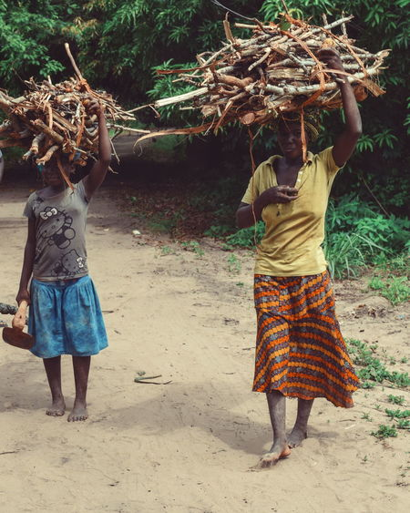 Women collecting firewood in the forest, Nkhata Bay, Malawi Traditional Collecting Firewood Forest Nkhata Bay Kande Beach, Malawi Portrait Of A Woman Traditional Roles Tree Young Women Traditional Clothing Women Men Sand Carrying On Head