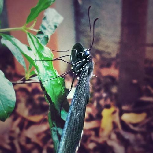 Finding nectar at wrong place 2 Good morning everybody Goodmorning Goodmorningpost GoodTimes Good Goodday Beautiful Butterflies Nature_shooters Naturephotography Nature Natureza Nature_perfection Naturelover Black Instapic Picoftheday Instacool Instacool Instadaily Instagram Indian_photographers Phodus_competition Likesforlikes