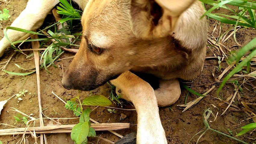 Puppy Stray Animal Stray Dog Straypuppy StrayDogsareCutetoo One Animal Animal Themes Close-up Leg Nature Day Outdoors Mammal Animal No People Dogs Puppy Love Puppy❤ Puppy Face Puppydog Puppylife Puppyeyes Puppies Of Eyeem Puppylove 😘😍🐶 Puppy Eyes EyeEmNewHere #puppy