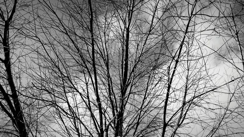 Photoshoot Night Photography Tree And Sky Beautiful Night Winter Nights ❄ Tree_collection  Tree Silhouette Bkack And White Blackandwhite Photography