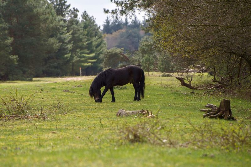 A wild horse in nature Animal Horse Wild Wildlife & Nature Nature No People Tree Animal Themes Animal Wildlife Mammal Grazing Full Length Forest Beauty In Nature Full Frame Nikon D750 Landscape_Collection Landscape Landscape_photography EyeEm Nature Lover Eye4photography  EyeEm Best Shots
