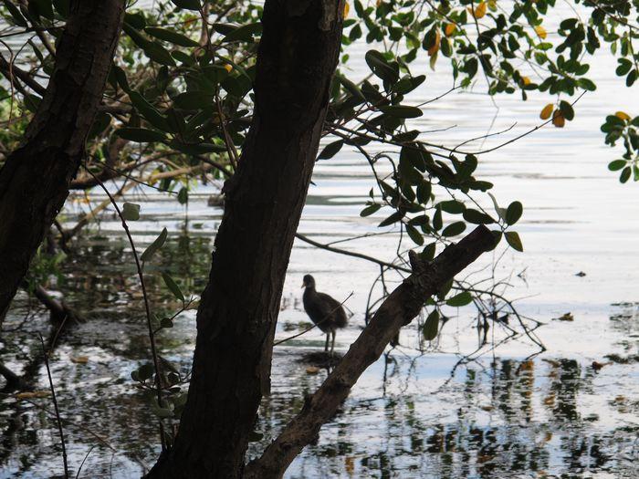 Espelho Animal Themes Animals In The Wild Tree One Animal Bird Animal Wildlife Nature