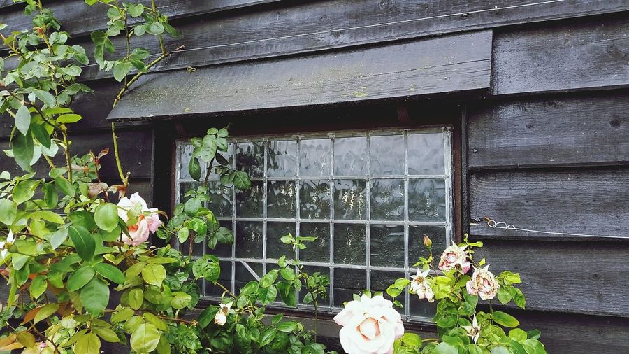 Windows Flatfordmill Flatford Mill Timber Frame Window Shiplap Roses