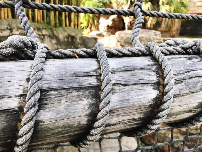 Close-up of rope tied to log