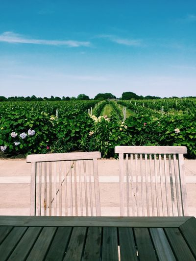 Wolfer Estates Winery Winefields Day Growth Hamptons Nature No People Outdoors Plant Sky Tree Winecountry Winery