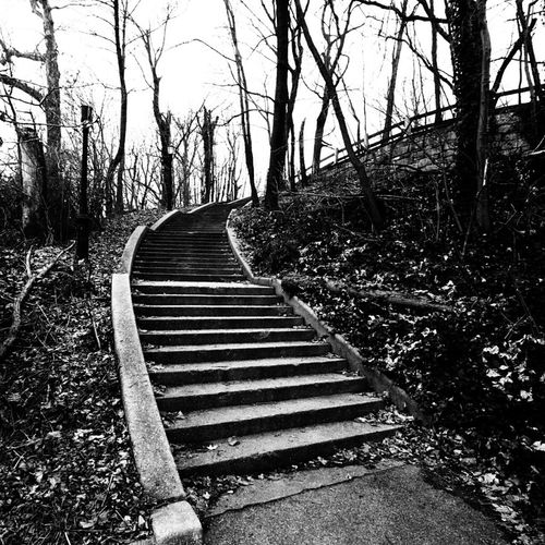 Going Up Claunch 72 Monochrome Film Black And White Street Photography Black & White Park Staircase Steps Popular Monochrome Bricks Nature_collection Eye4photography  Nature