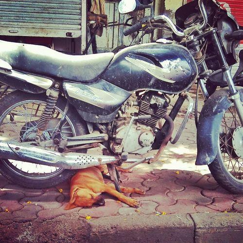 Squeezing in for some shut eye. Street Streetphotography Straydogs StrayDogsareCutetoo Mumbai Meri Jaan Mumbai Urban Lifeonthestreet Mobilephotography Redmi2