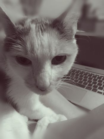 Me And My LiliBug Chillin' Cute Pets Yes, Another LiliBug Pic My Bug  MyLilibug Macbook Air Bnw Vintage Filter 😉✨🐱
