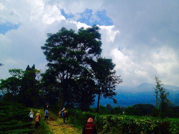 Tree Sky Cloud - Sky Nature Real People Growth