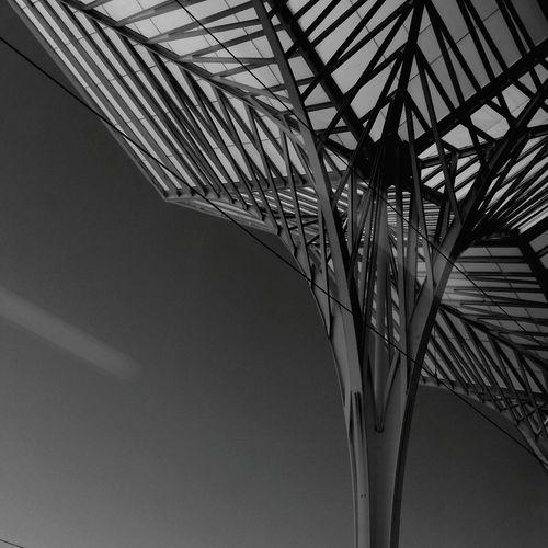 iron palm tree Train Station Urban Geometry Urbanphotography Urban Lifestyle EyeEm Selects Calatrava Architecture Blackandwhite Close-up Sky Palm Leaf Palm Tree Building Exterior