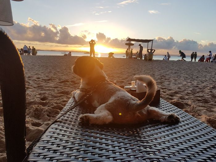 Animal Themes Beach Beauty In Nature Day Dog Domestic Animals Large Group Of People Mammal Nature One Animal Outdoors People Pets Real People Relaxation Sand Sea Sky Sunlight Sunset Water