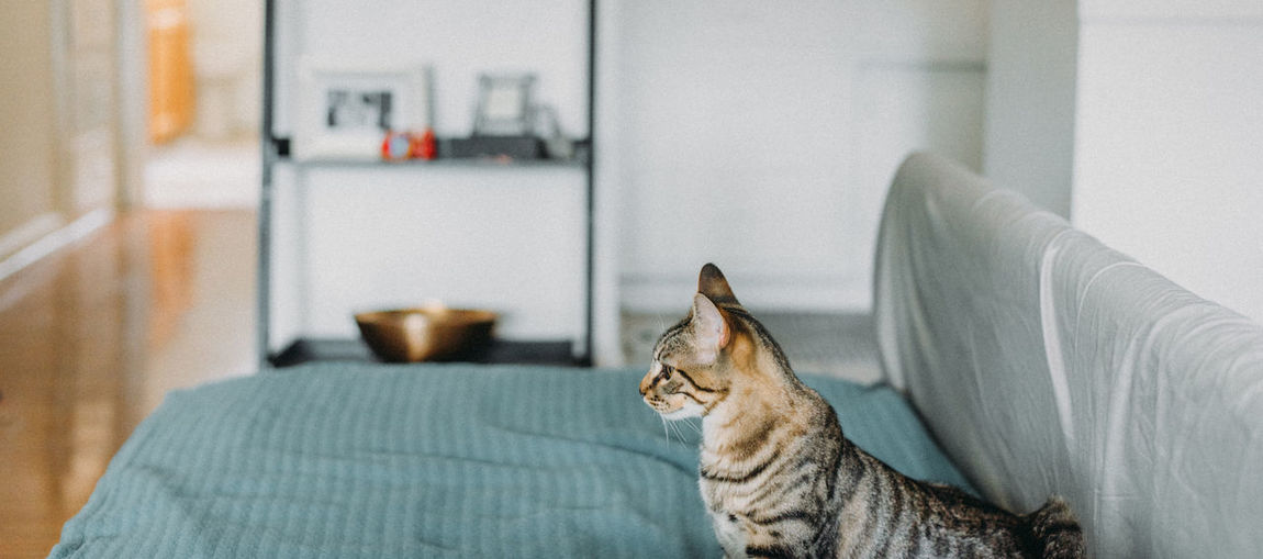 Cats Of EyeEm Kitty Animal Themes Cats Day Domestic Animals Domestic Cat Indoors  Mammal One Animal Pets