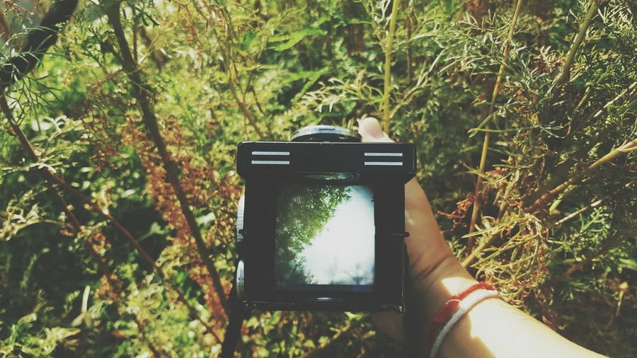 Photography Themes Photographing Human Hand Camera - Photographic Equipment Holding Human Body Part Outdoors Device Screen Grass Tree Vintage Camera Landscape Outdoor Photography Waistlevel Waistlevelfinder Travel Journey Viewfinder Film Filmcamera Day Nature Rolleiflex Rolleiflex2.8E Rollei The Great Outdoors - 2017 EyeEm Awards