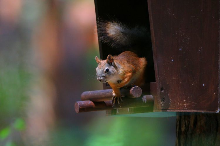 View of a squirrel in the feeder