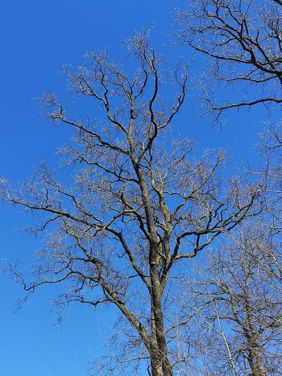 Low angle view of bare tree against blue sky