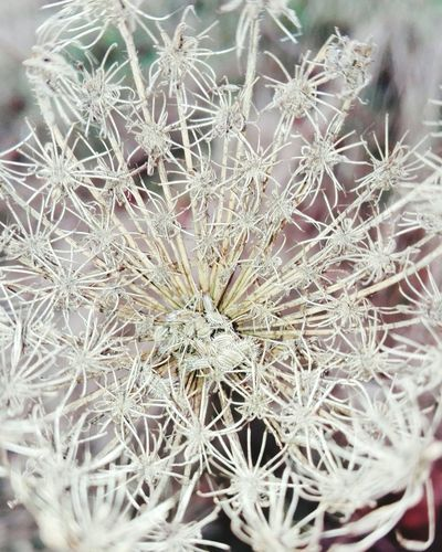 Me gusta! Nature Close-up No People Plant Outdoors Day Growth Beauty In Nature Fragility Dried Plant Needle - Plant Part