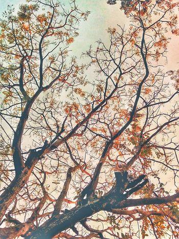 Tree Tree Photography Tree_collection  Tree View Nature Nature Photography Nature Collection Nature Color Color Of Tree Color Of Nature Colorful Nature Colorful Tree Beauty Of Tree Beauty Of Nature