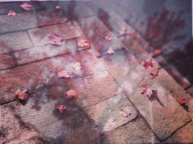 -¿Cómo va el recuento? -Más de 200 otoños. Onedaythreeautumns Undíatresotoños Microhistorias » »Tranquility Tranquilidad Autumn Otoño Hojas Leaves Tree Suelo Floor Caer Dawn Double Exposure Doble Exposición Dry Leaves Hojas Secas Microhistoriastesis99 Tesis99 Évora  EyeEm Outdoors Proverbiochino Chineseproverb BYOPaper! The Week On EyeEm