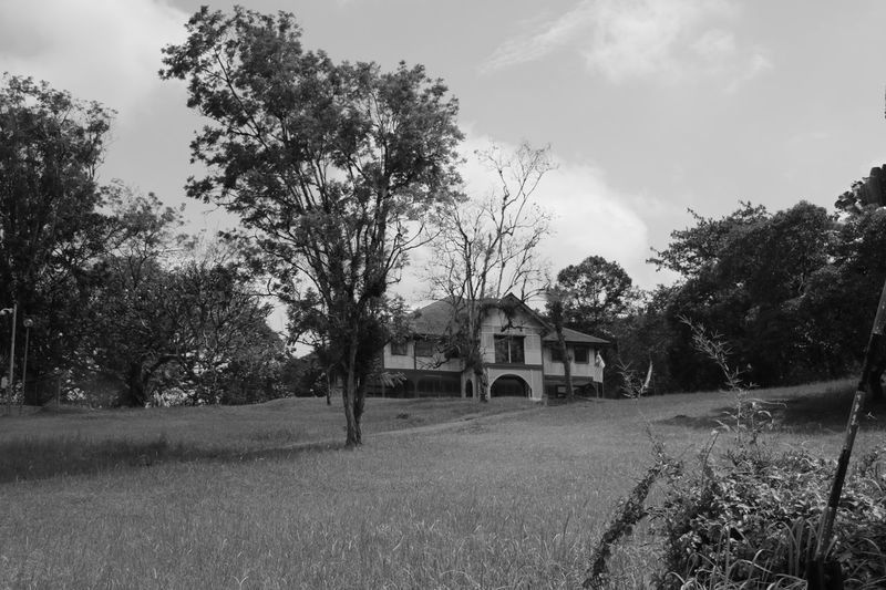 Haunted house up the hill Tree House Architecture No People Rural Scene Hounted House Hounted