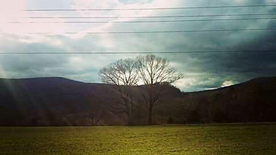 Allaboutnature Treesinlove Deuces Fieldofdreams Perfectlight
