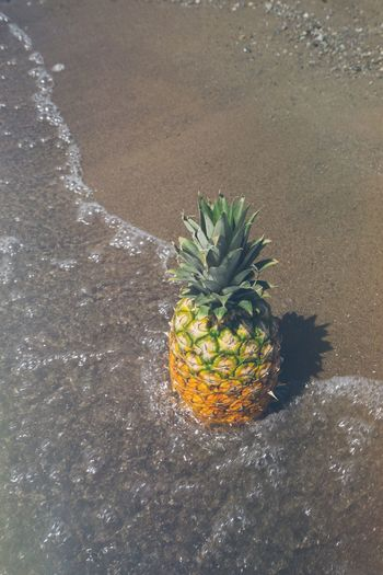 Pineapple at the beach as water comes up on the sandy sore during a beautiful summertime like day Beach Beach Day Beach Life Beach Photography Beach Vibes Food Fruit Healthy Eating Healthy Food Healthy Lifestyle Lake Ocean Pineapple Pineapples Sand Sea Shore Summer Summer Vibes Summertime Sunny Day Tropical Tropical Fruit Water Wave