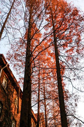 初冬那个秋 Trees