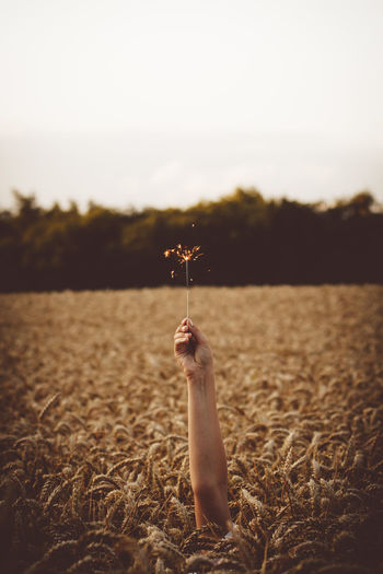 Hand of person holding sparkler in wheat field against sky
