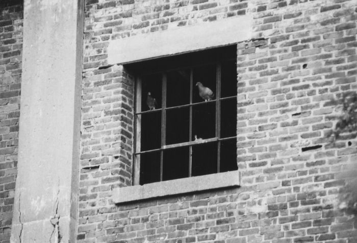 Pigeon hole Deteriorated Structure Broken Old Window Building Exterior No Glass Old Brick Wall Perched Birds Pigeons Window Window