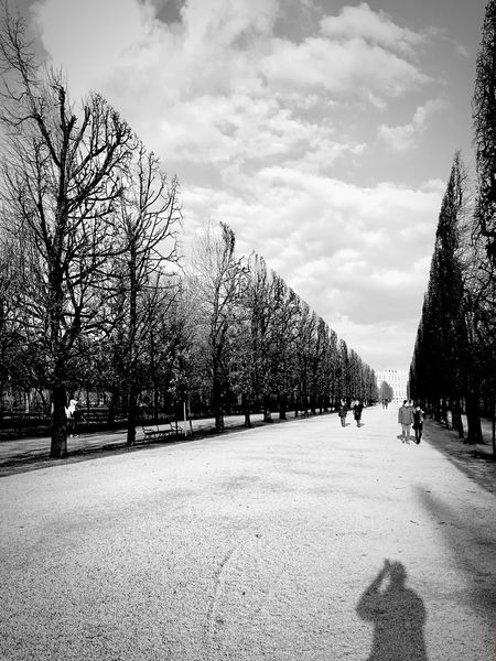 Baumschnitt. Tree Sky Bare Tree Cold Temperature March 2017 Beauty In Nature Schönbrunn Castle Park Perspectives On Nature The Week Of Eyeem Cloud - Sky Outdoors Light And Shadow Silouette Shadow Welcome To Black Vienna Vienna, Austria Tree Schloß Schönbrunn Black & White Black And White Photography Black And White Long Goodbye Black And White Friday