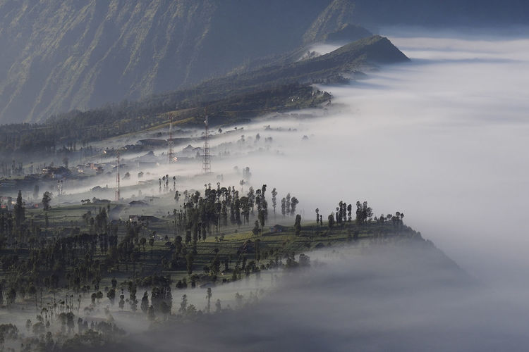 Bromo is covered mist Bromo Cloud - Sky Tree Landscape Nature Sky Beauty In Nature Fog My Best Photo